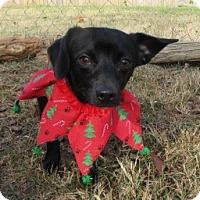 Adopt A Pet :: Albee - Bedford, TX