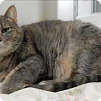 Adopt A Pet :: Skitza - Topeka, KS