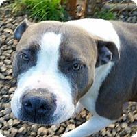 Adopt A Pet :: Baby - Irmo, SC