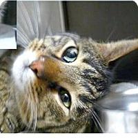 Adopt A Pet :: Cash - Springdale, AR