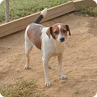 Adopt A Pet :: Brady - Groton, MA