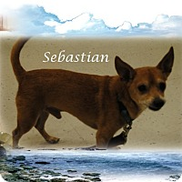 Adopt A Pet :: Sebastian - Crowley, LA