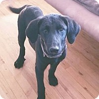 Adopt A Pet :: Charles - DeForest, WI