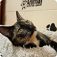 Adopt A Pet :: Opal - Smithfield, NC
