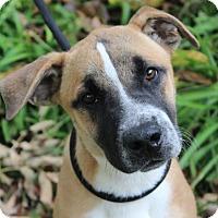 Adopt A Pet :: WATSON - Red Bluff, CA