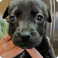 Adopt A Pet :: Olive - Oakley, CA