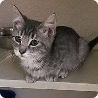 Adopt A Pet :: Pooh - Richland Hills, TX