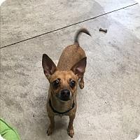 Adopt A Pet :: Charity - Nashville, TN