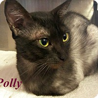 Adopt A Pet :: Polly - El Cajon, CA