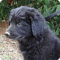 Adopt A Pet :: *Grant - PENDING - Westport, CT