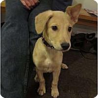 Adopt A Pet :: Bonnie - CHESTERFIELD, MI