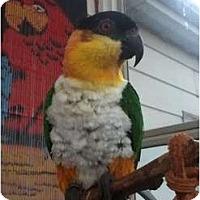 Adopt A Pet :: AUGGIE - Mantua, OH