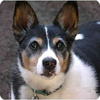 Adopt A Pet :: Waldo - Concord, CA