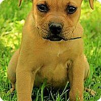 Adopt A Pet :: Lala - Brattleboro, VT