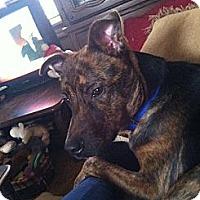 Adopt A Pet :: Dante - McKeesport, PA