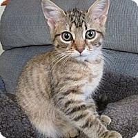 Adopt A Pet :: Jewel - Acme, PA