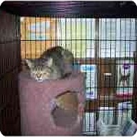 Adopt A Pet :: Danka - Grand Rapids, MI