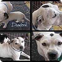 Adopt A Pet :: Diamond - Crowley, LA