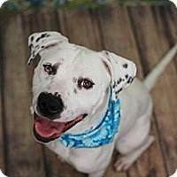 Adopt A Pet :: Piper - Nashville, TN