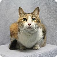 Adopt A Pet :: Daisy Mae - Greensboro, NC