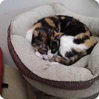 Adopt A Pet :: Lara - Columbus, OH