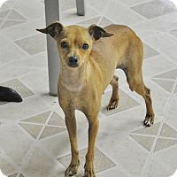 Adopt A Pet :: Peanut - Brooklyn, NY