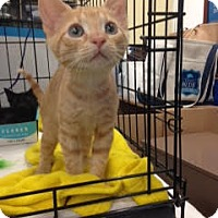 Adopt A Pet :: Eli - Richmond, VA