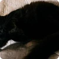 Adopt A Pet :: Xena - reduced fee - Ennis, TX
