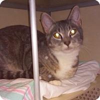 Adopt A Pet :: Marley - Franklin, NH