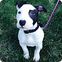 Adopt A Pet :: Puzzle - Christiana, TN