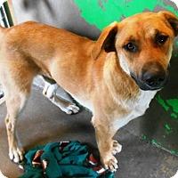 Adopt A Pet :: Link - Redding, CA