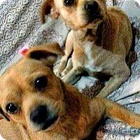Adopt A Pet :: Dora and Clara-PENDING - Boulder, CO