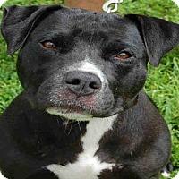 Adopt A Pet :: DARCY - Naples, FL