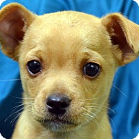 Adopt A Pet :: Teddy - Erwin, TN