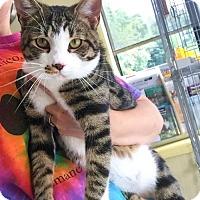 Adopt A Pet :: Moe - Erwin, TN