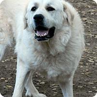 Adopt A Pet :: SCOUT - Granite Bay, CA
