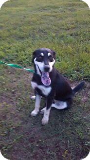 German Shepherd Dog/Labrador Retriever Mix Dog for adoption in Decatur, Alabama - FLOWER