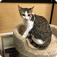 Adopt A Pet :: Freckles - Riverside, CA