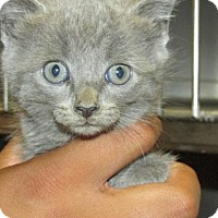 Adopt A Pet :: Cat 0006 - Rocky Mount, NC