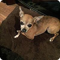 Adopt A Pet :: Twiggy - Blanchard, OK