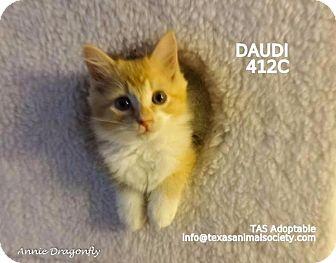 Domestic Mediumhair Kitten for adoption in Spring, Texas - Daudi