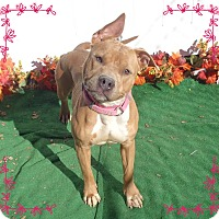 Adopt A Pet :: LOTUS - Marietta, GA