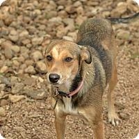 Adopt A Pet :: Kim - San Antonio, TX