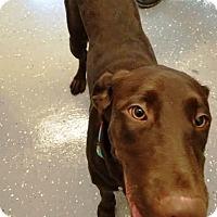 Adopt A Pet :: Brandy - Kalamazoo, MI