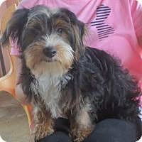 Adopt A Pet :: Tug Boat - Allentown, PA