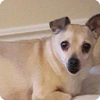 Adopt A Pet :: Libby - Blackstock, ON