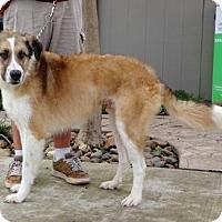 Adopt A Pet :: Tonka - Lathrop, CA