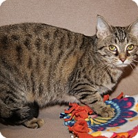 Adopt A Pet :: Betsy (Spayed) - New Photos - Marietta, OH