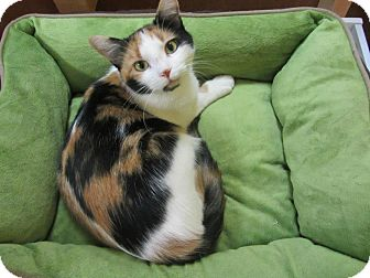 Calico Cat for adoption in Mobile, Alabama - Cassandra
