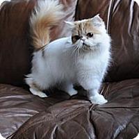 Adopt A Pet :: Josie - Columbus, OH